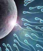 El óvulo es quien elige que espermatozoide lo va a fecundar