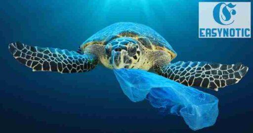 Plástico en los océanos