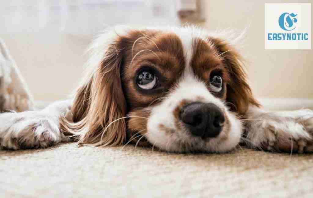 Problemas emocionales en las mascotas