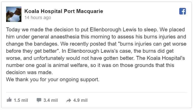 Koala Hospital Port Macquaire informa como falleció Lewis el koala